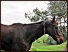 Lovely Horse.