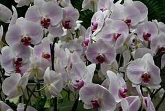 Field of Orchids