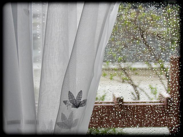 Les larmes de pluie…. Merci pour Explorer