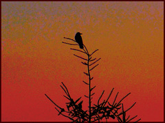 Le visiteur du dernier soir... The visitor of the last evening...