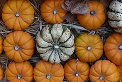 Rangement d'automne