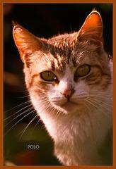 Gato encaramado y camuflado (+2 PiP)