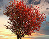 1 (56)...austria tree baum