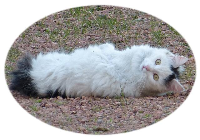 Postures de chat (VOIR NOTES de gauche à droite)