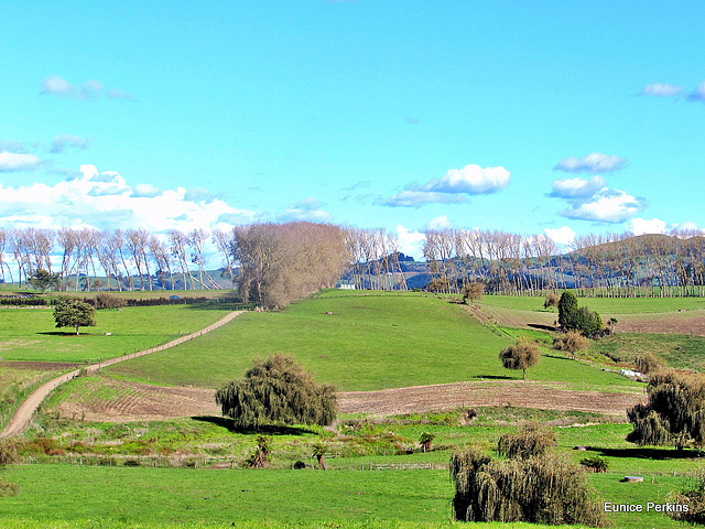South Waikato Farmland
