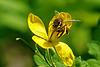 Happy World Bee Day - Weltbienentag