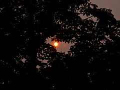 """CLIMATE CHANGE SUNRISE: No longer a question of """"If"""", but now, """"When"""" forest fires start?"""