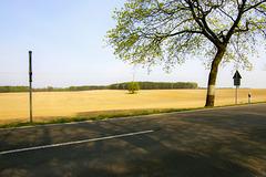 Baum mit Strommast
