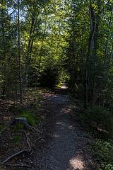 190730 Uttigen-Kiesen sentier