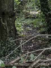 A natural barrier
