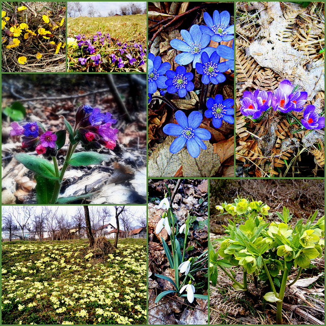 March collage of wild flowers