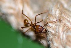 Ant - 20150413
