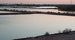 Tejo estuary saltpans