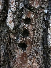 Pecker Holes (2732)