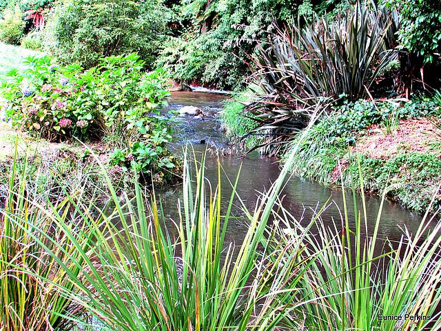 Dunham Park Stream.
