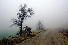 Ein nebliger Novembermorgen - A misty November morning
