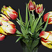 Jolies tulipes