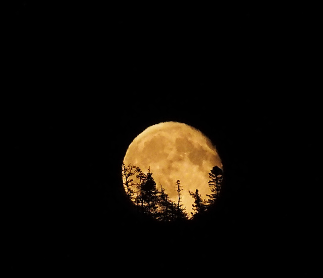 Moon rising over the hill across the Arm last night