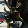 Red Cactus Flowers (1767)