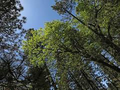 Trees (2777)