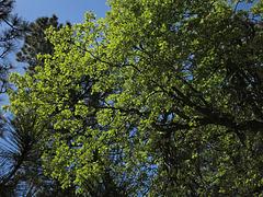 Trees (2780)