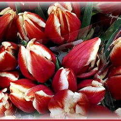 Vivement le printemps !!!! bonne semaine