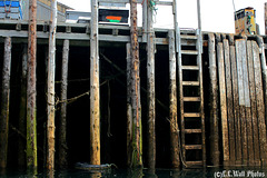 Far Under the Cutler Dock (Low Tide: Ladder Is Important)