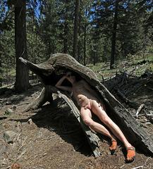 Wood Nymph (2723)