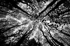 Forest from Below