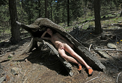 Wood Nymph (2726)