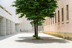 two trees 02 (2014)