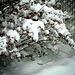 DE la neige au Québec...