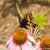 Butterfly Flutter