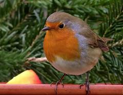 Chants d'Oiseaux en Forêt