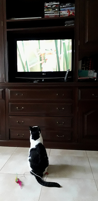 Watching wild life on TV.