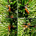 Stray wasp... ©UdoSm