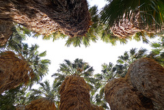 USA - California, Coachella Valley Preserve