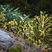 varie succulente