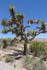USA - California, Joshua Tree National Park