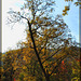 289/366: Autumn in Lithia Park