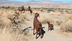 Borrego Springs, CA bighorn sheep sculptures (#  0632)