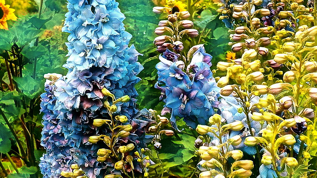 Flowers at Dragon Lake, Quesnel, BC