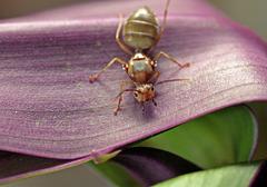 *Queen Ant*