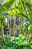 Im Palmenwald. ©UdoSm