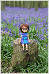 Wren amongst the Bluebells