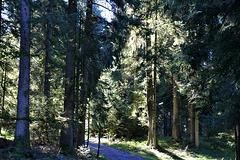 Herbst im Bregenzer Wald