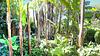 Palmen und Bambuswald. ©UdoSm
