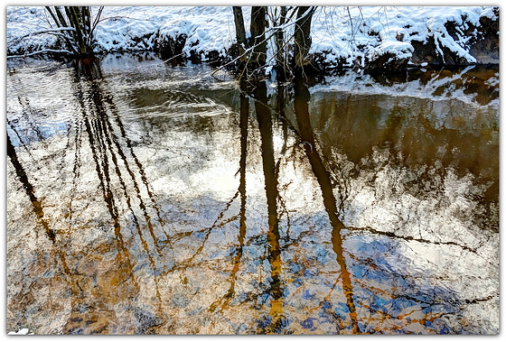 Riverside trees reflected on the Derwent - North Yorkshire
