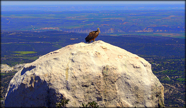 EL Cancho de La Bola, home to this and many other Griffon Vultures. See you all in a couple of weeks!