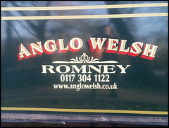 Anglo Welsh Romney